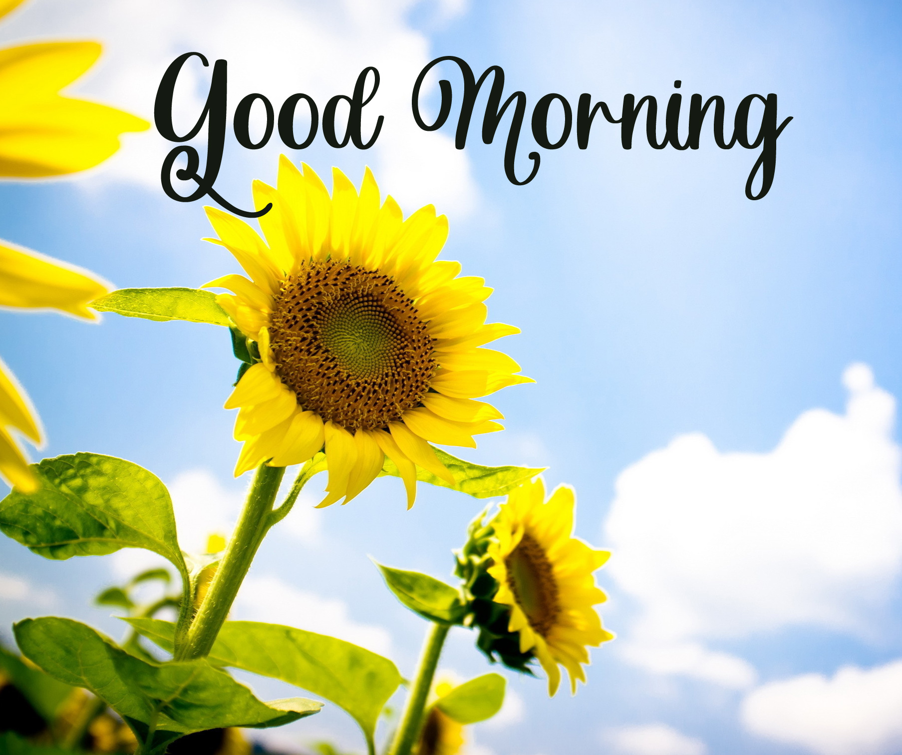 good morning images photo hd 1