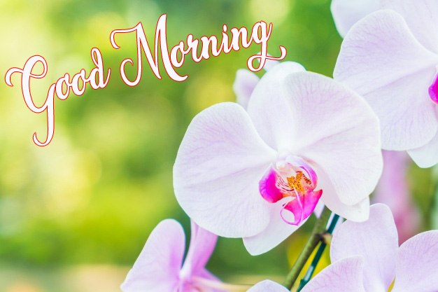 good morning images wallpaper download 2