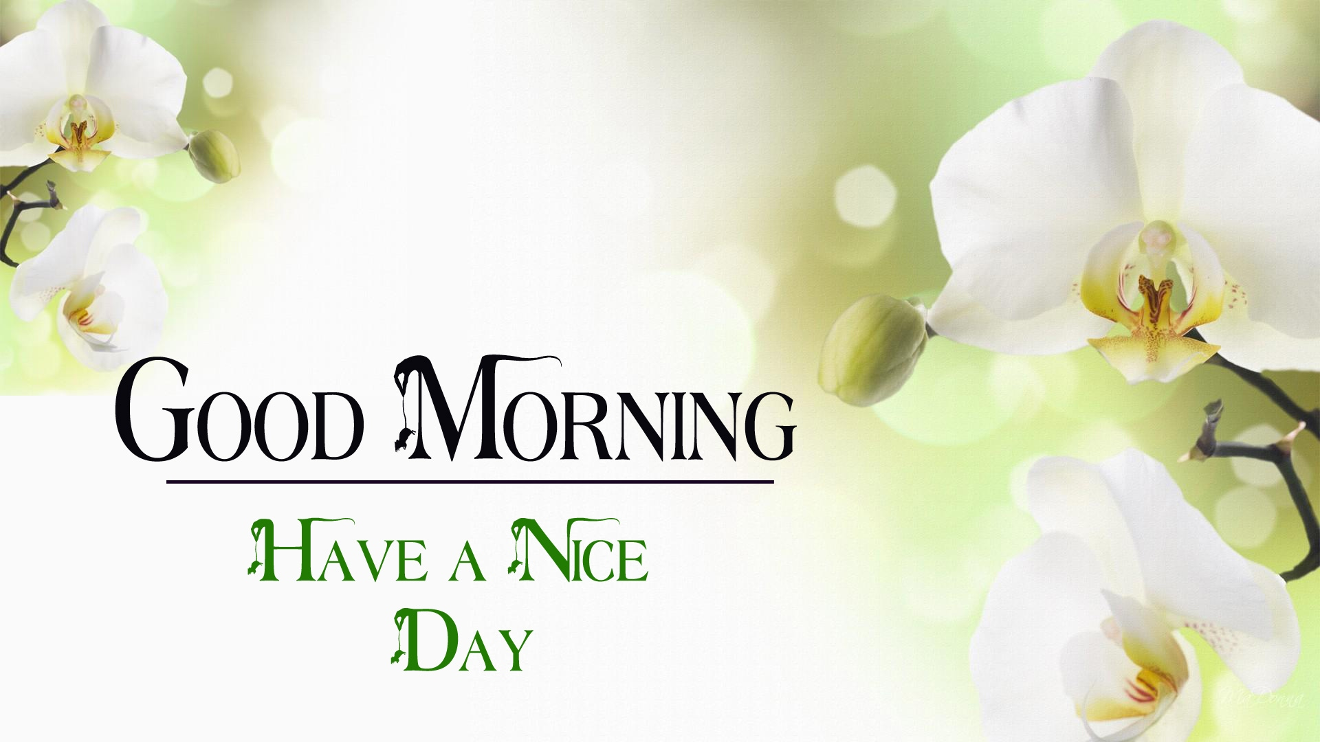 good morning images wallpaper for facebook 2