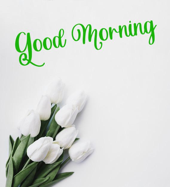 latest flower good morning images wallpaper download