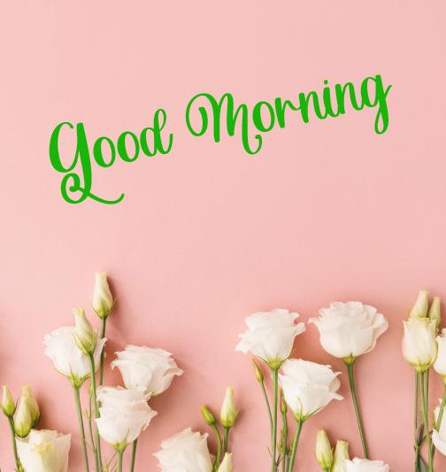 latest flower good morning images wallpaper hd