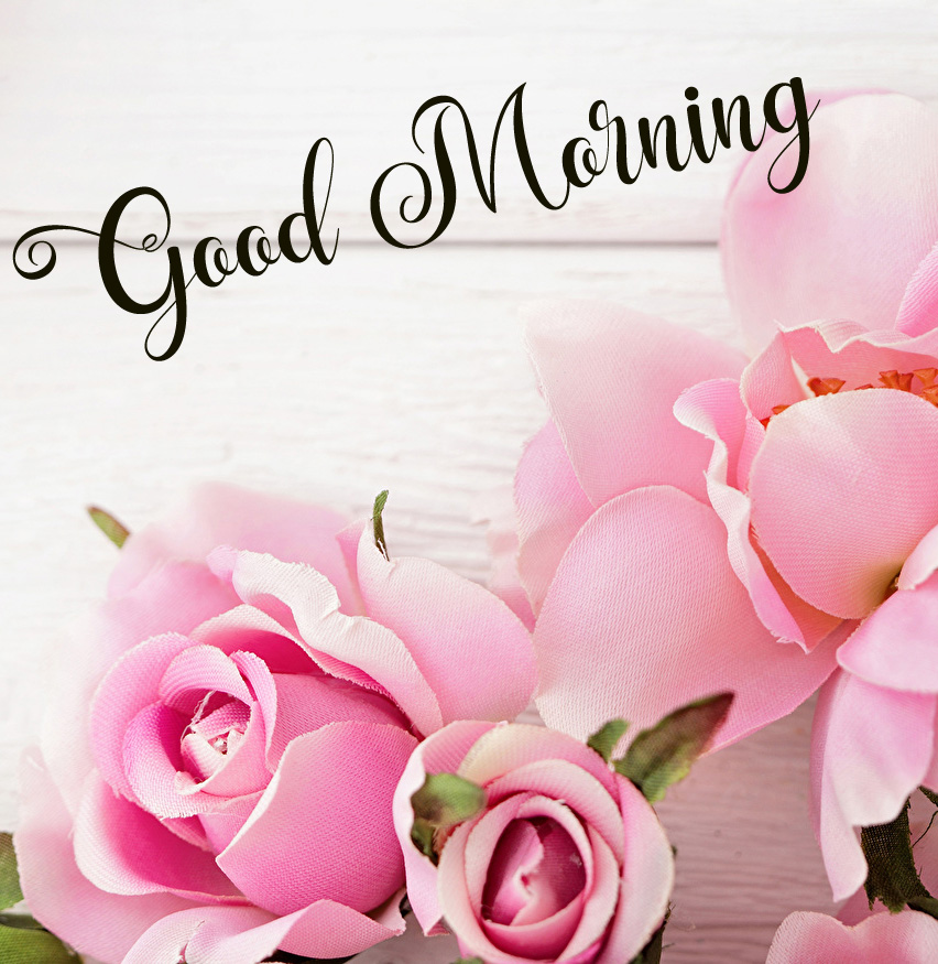 new flower good morning images photo free download