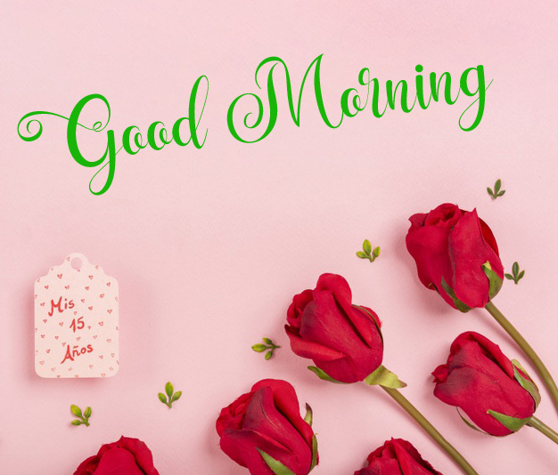 new flower good morning images photo hd download