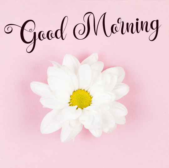 new flower good morning images photo pics hd