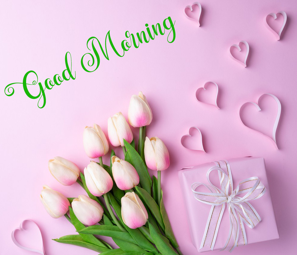 new flower good morning images pics for whatsapp