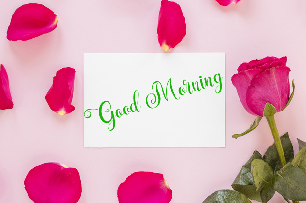 new flower good morning images pics free download