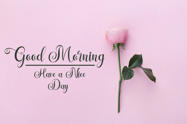 new flower good morning images pics hd