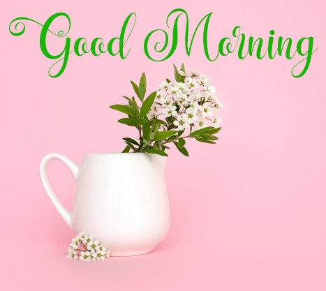 new flower good morning images pics photo wallaper hd download
