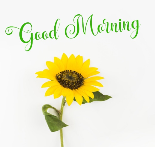 new flower good morning images pictures download