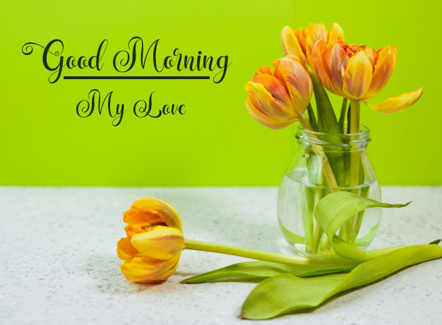 new flower good morning images pictures hd download