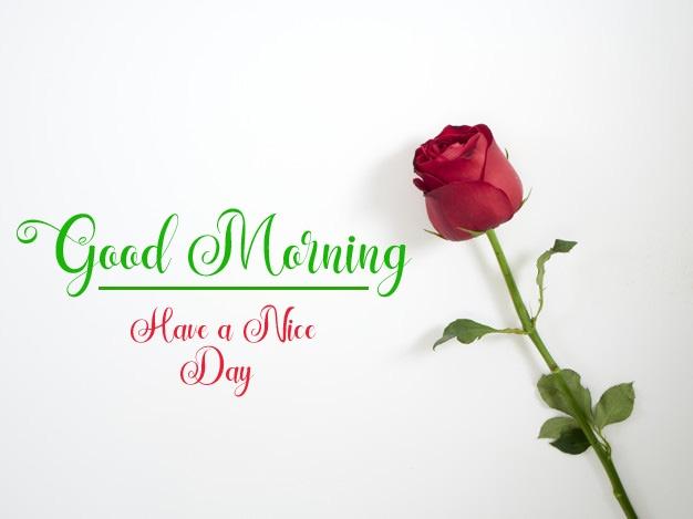 new flower good morning images wallpaper for whatsapp
