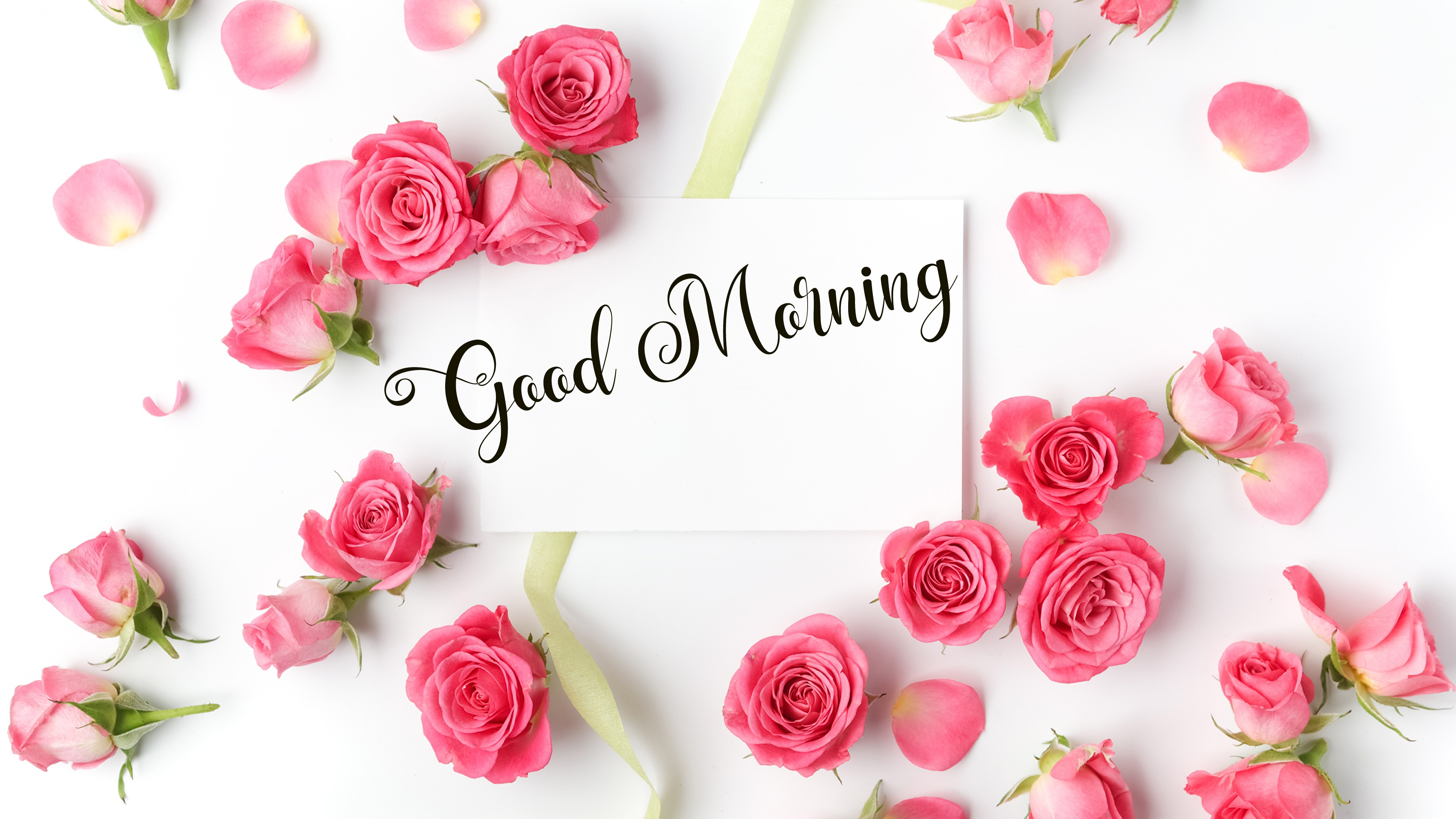 new flower good morning images wallpaper free download
