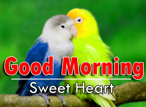 nice bird good morning images photo pics hd