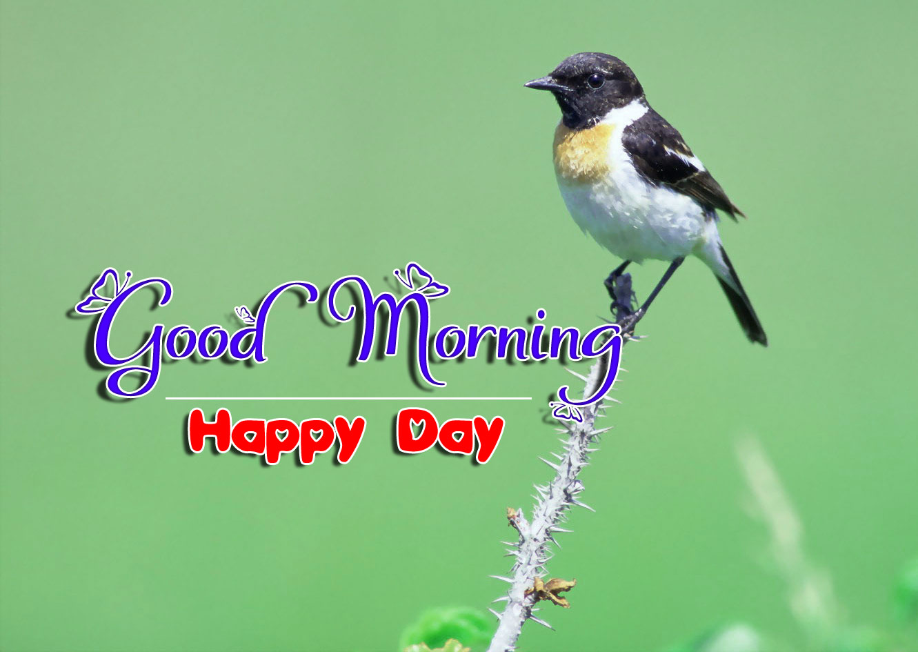 nice bird good morning images wallpaper hd