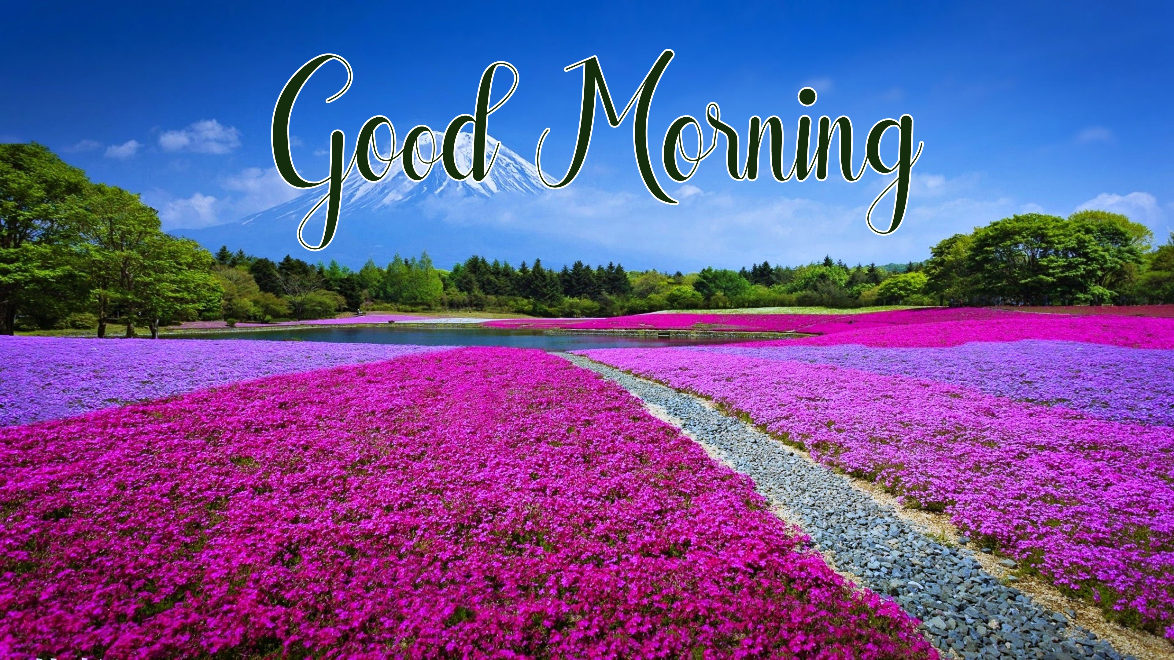 nice flower good morning images pictures download 1