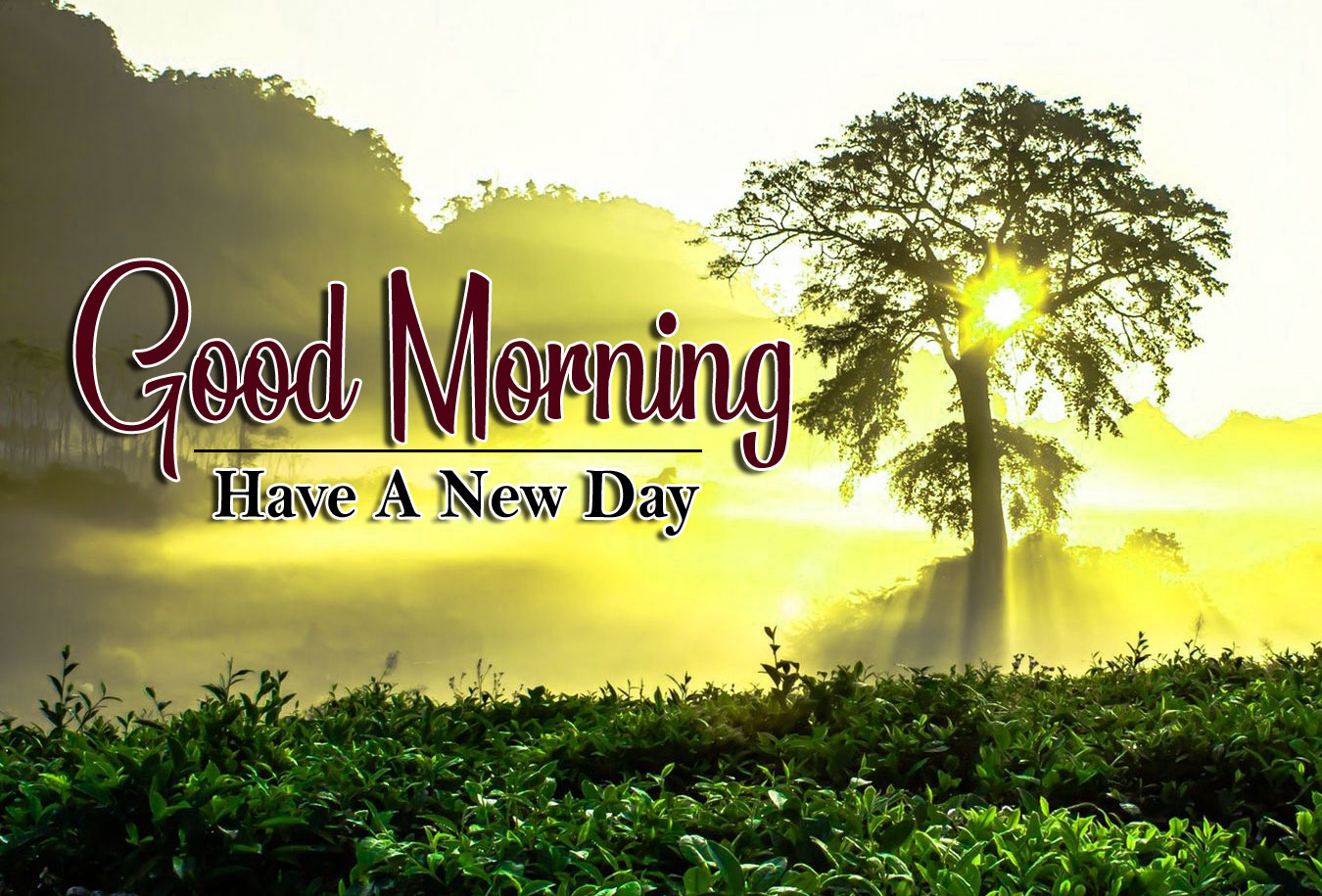 nice good morning images photo pic hd download