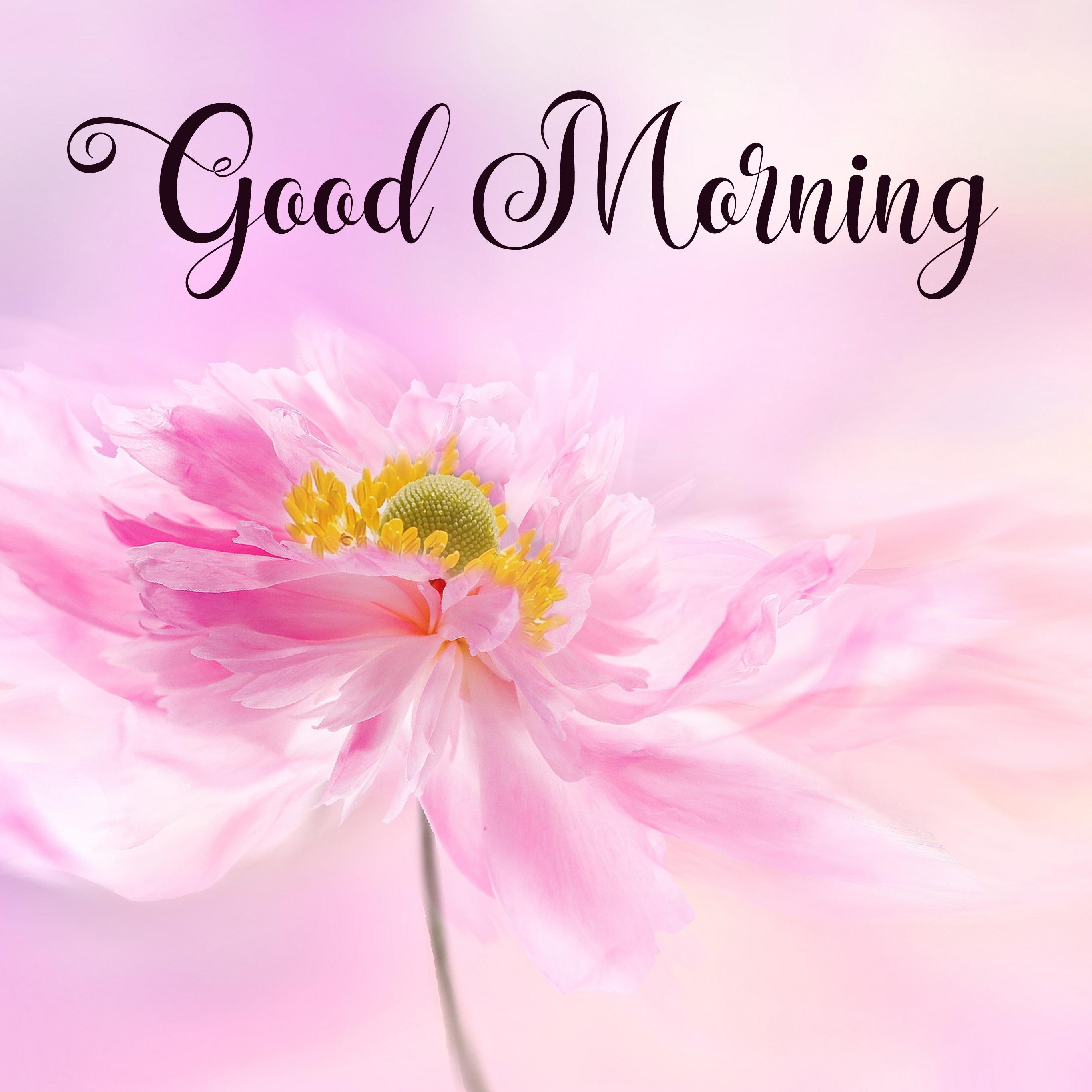 nice good morning images pics hd 1
