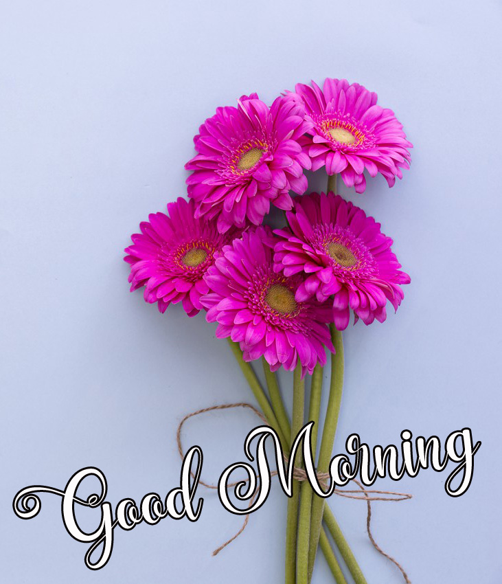 nice good morning images pictures download 1