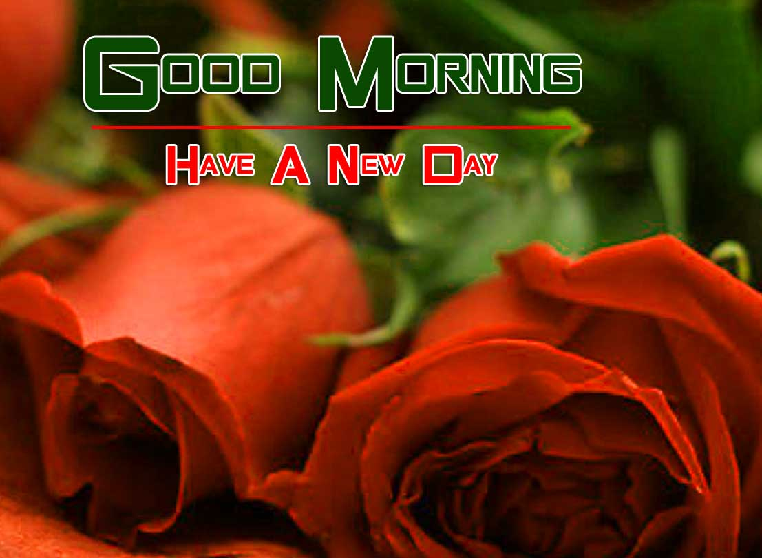 nice rose Good Morning Images pics hd