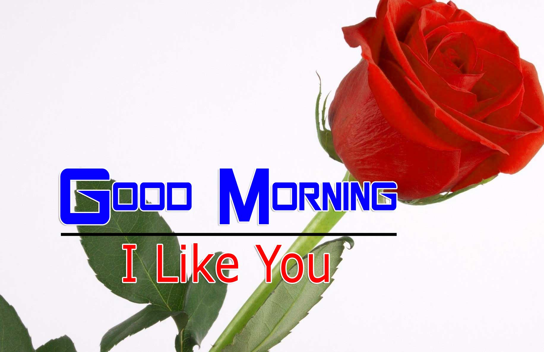 nice rose Good Morning Images pictures hd