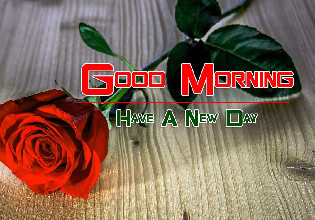 nice rose Good Morning Images pictures pics hd