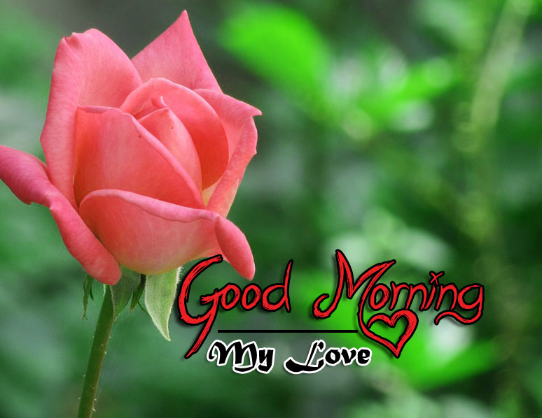 rose Good Morning Images pics for hd