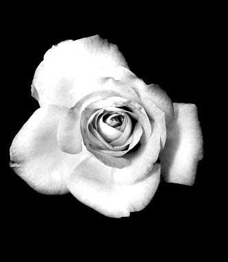 Black Whatsapp Dp Photo With Flower