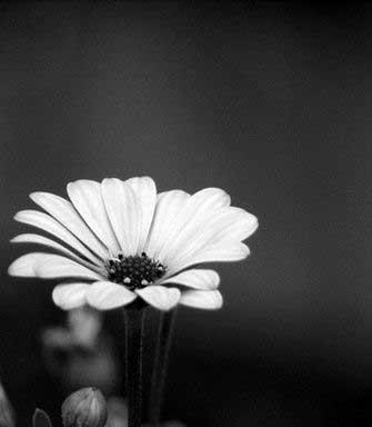 Flower Black Whatsapp Dp images Pics Download