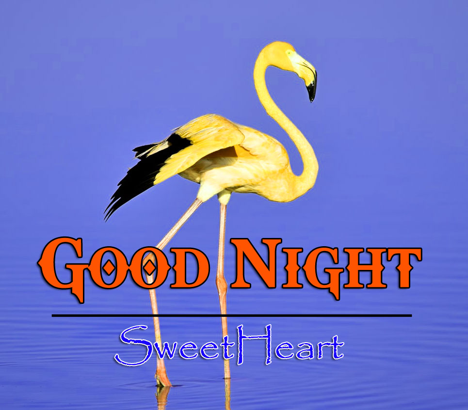 New Good Night Pictures Images 1