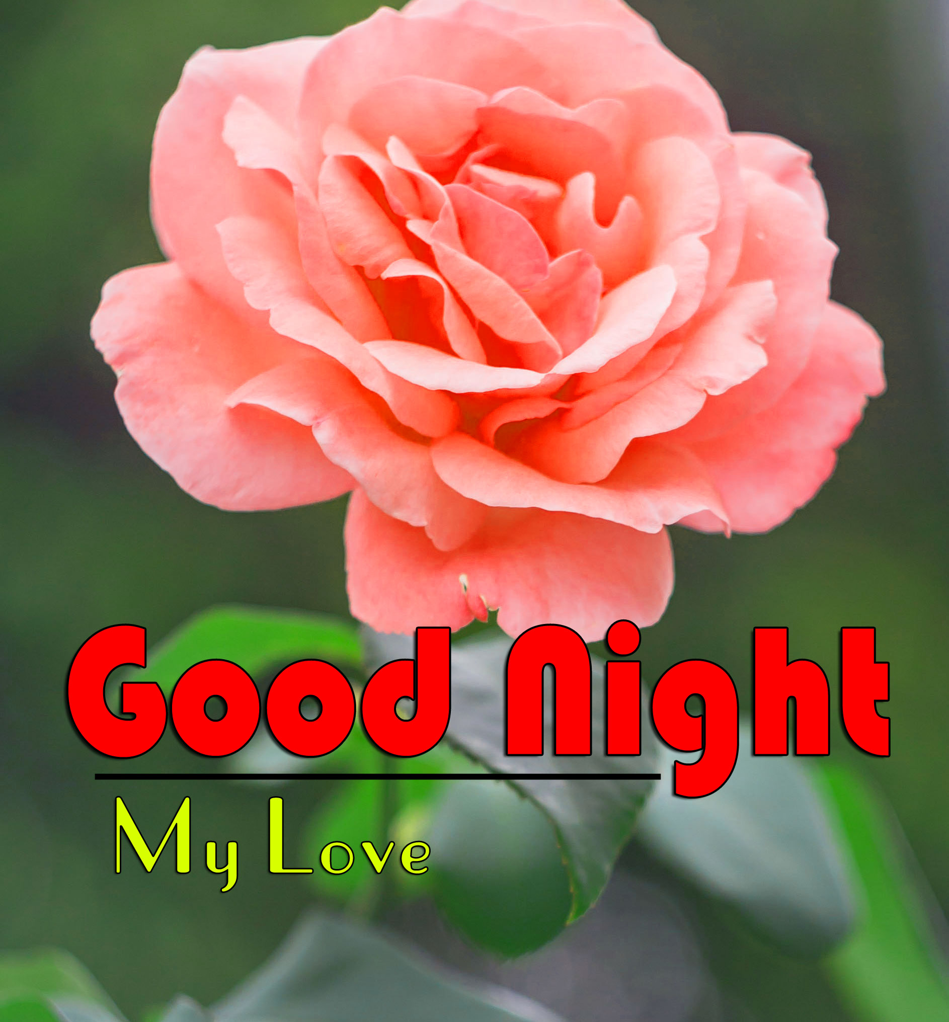 Top Good Night Photo Pictures