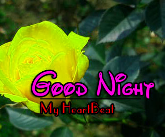 Top Good Night Pictures Photo