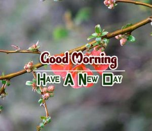 Beautiful Good Morning Images Photo 6