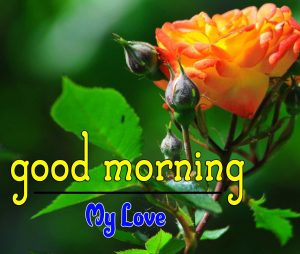 Beautiful Good Morning Images Pics 5