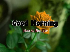 Beautiful Good Morning Images Pics 8