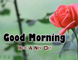 Beautiful Good Morning Photo Images 5