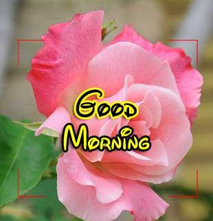 Beautiful Good Morning Photo Pics 1