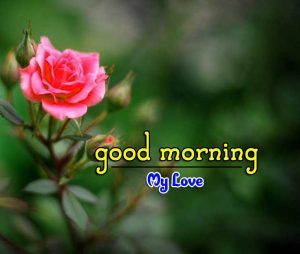 Beautiful Good Morning Photo Wallpaper 4