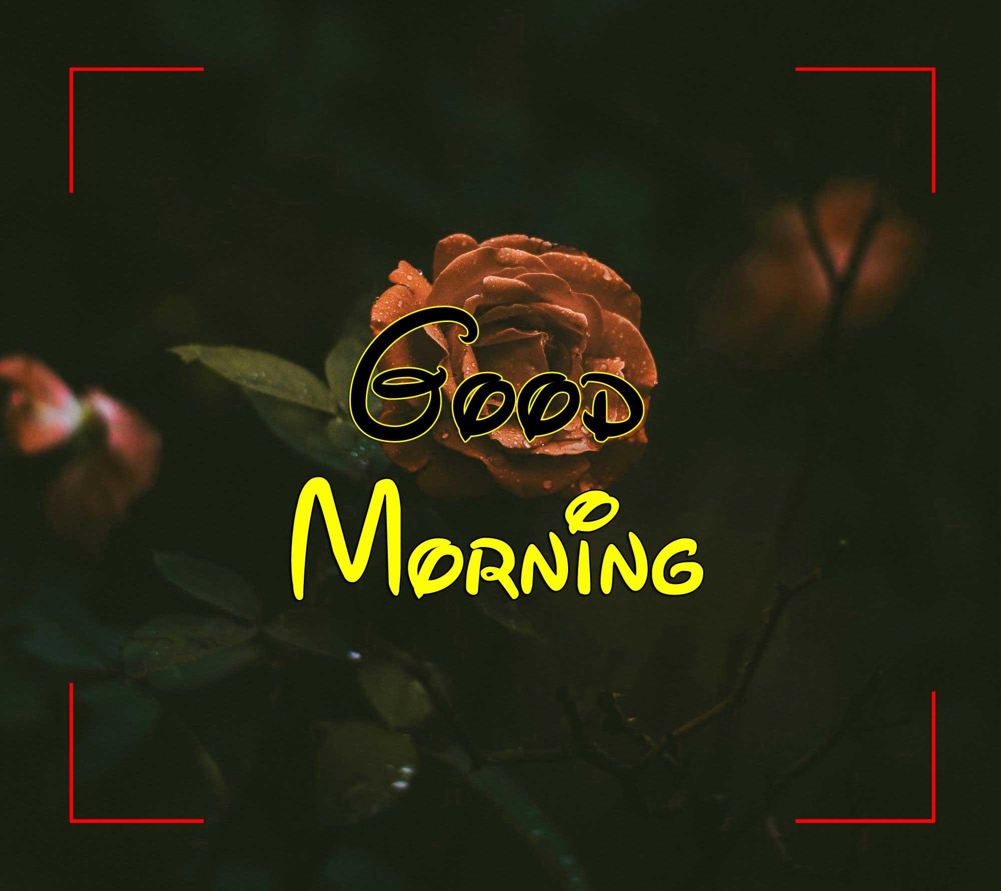 Beautiful Good Morning Pics Photo 2