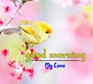 Beautiful Good Morning Pictures HD Free
