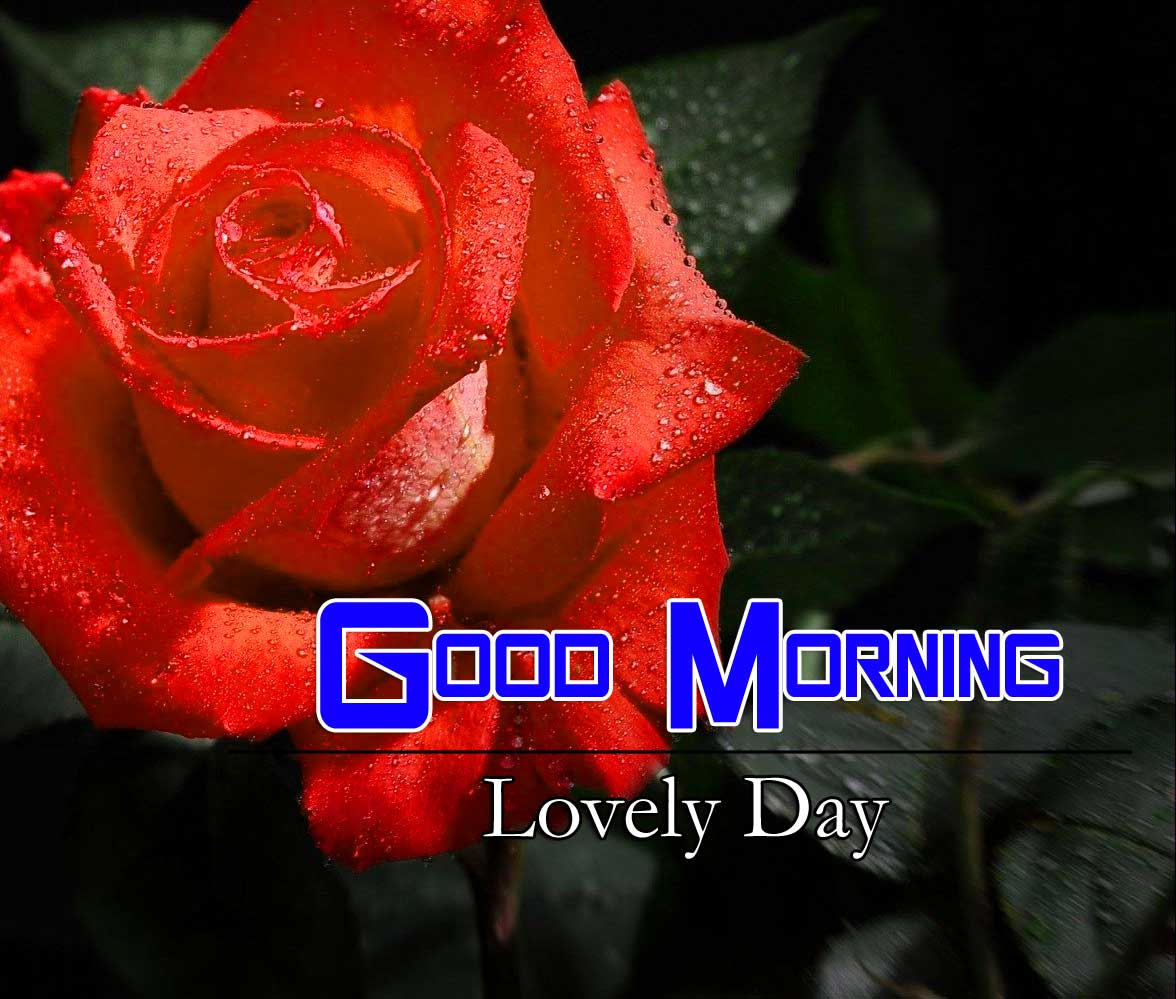 Beautiful Good Morning Pictures Wallpaper 1