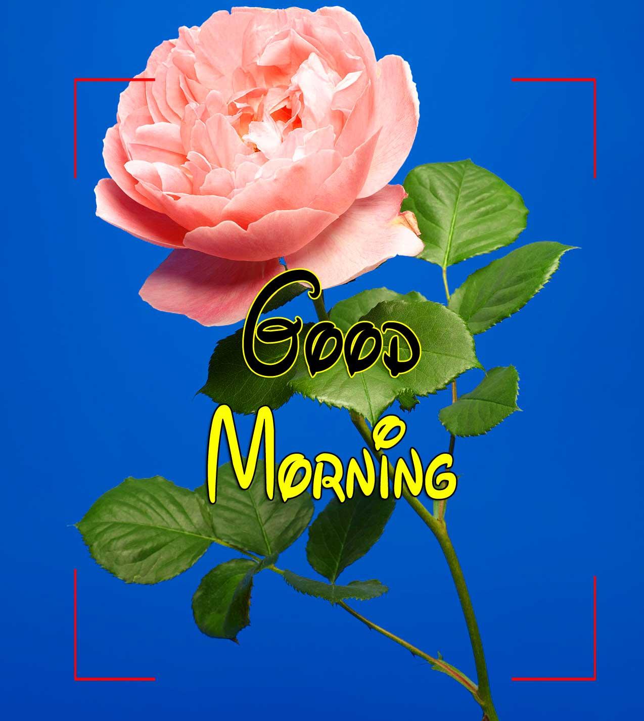 Beautiful Good Morning Wallpaper Download 1