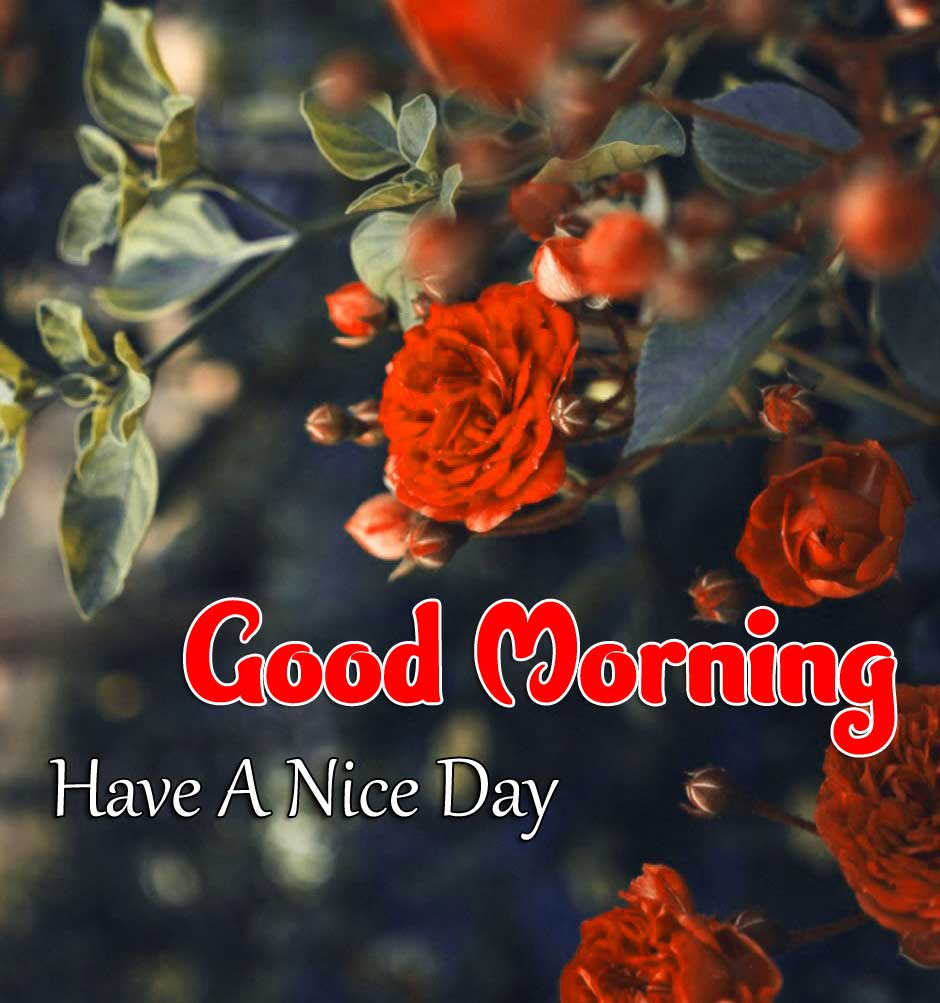 Beautiful Good Morning Wallpaper Pictures 1