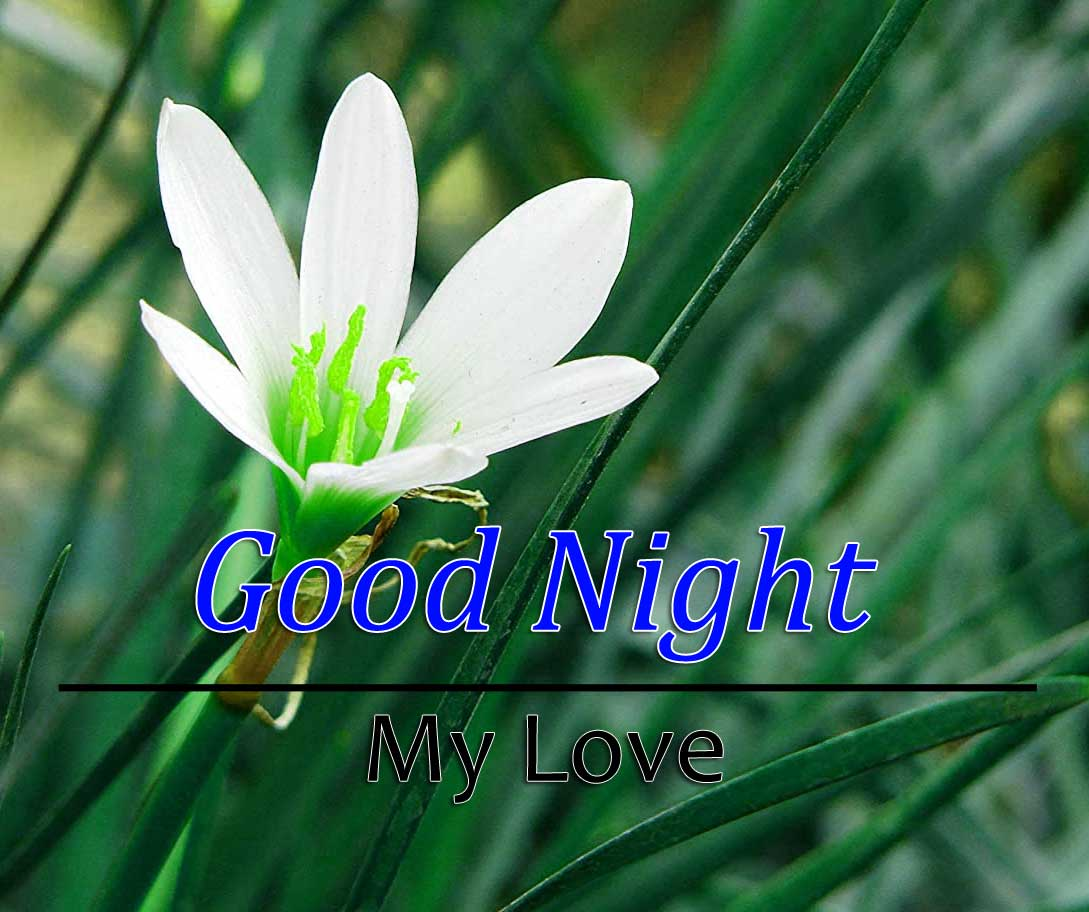Beautiful Good Night Photo Images 1