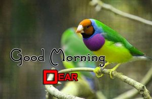 Best Good Morning Download Images 8