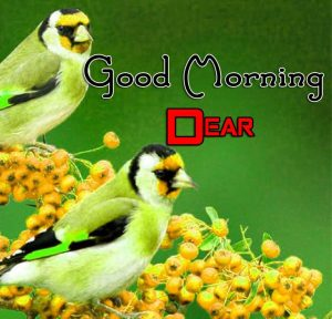 Best Good Morning Hd Images Download Free
