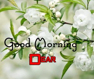 Best Good Morning Images Free Hd 3