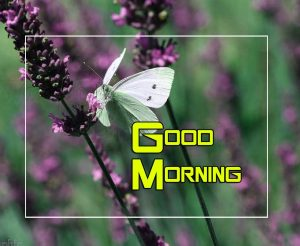 Best Good Morning Images Photo 14