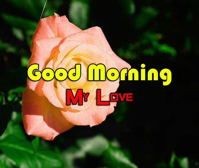Best Good Morning Pics Wallpaper 2