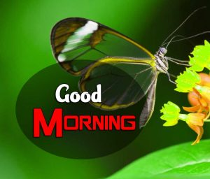 Best Good Morning Pics Wallpaper 4