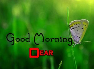 Best Good Morning Wallpaper Free 3